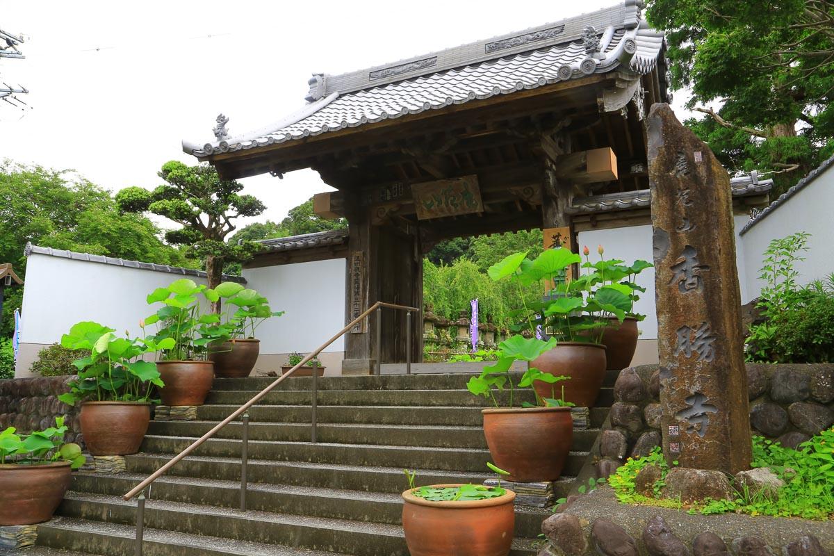 「ききょう寺」十五種四万五千株 百万本以上 日本最大級のききょう園