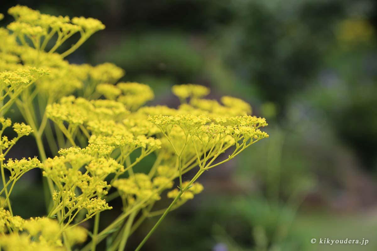 ききょう寺(香勝寺)「四季の花々」