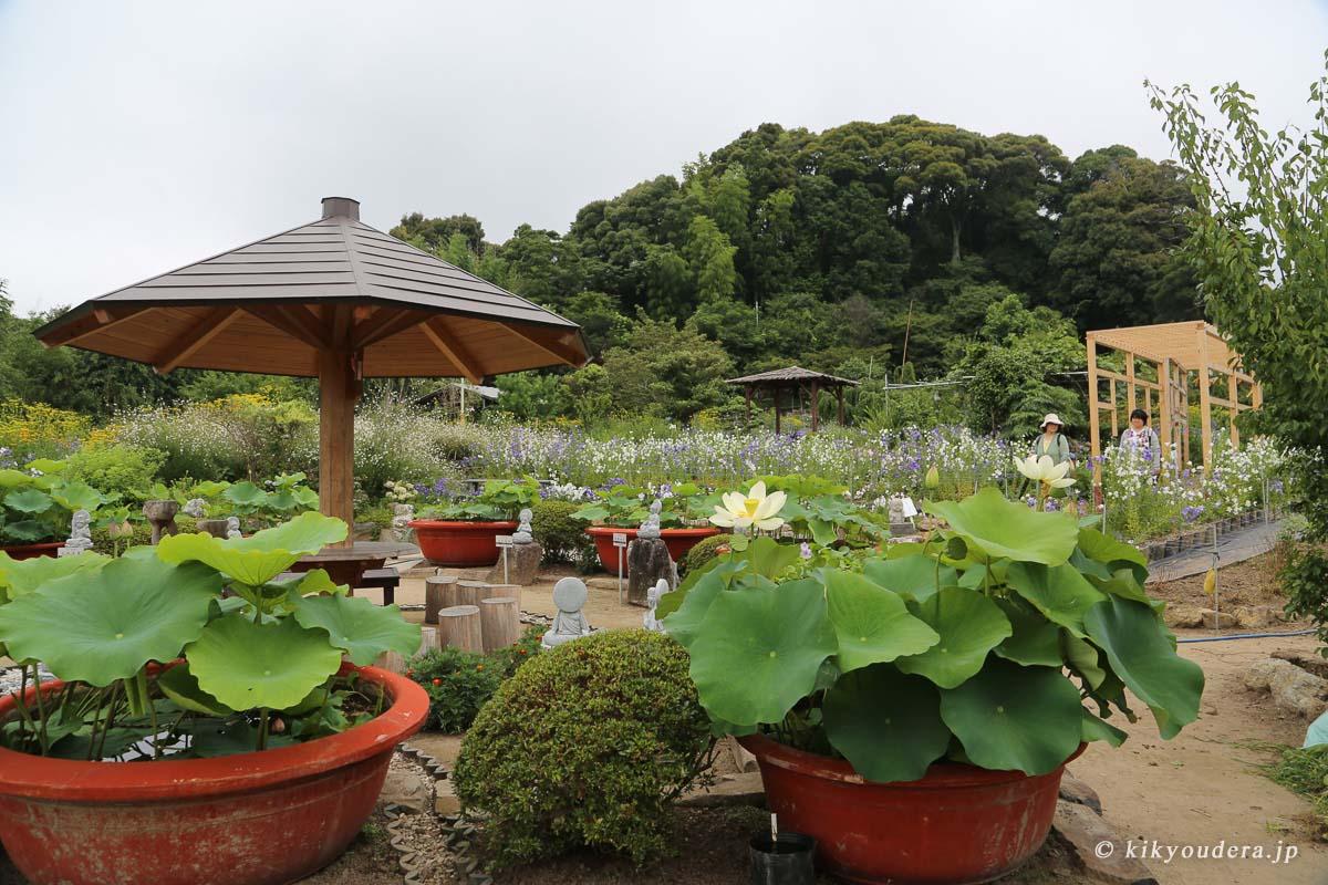 十三佛花蓮の庭